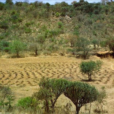 Dung manure heaps maize Dongobesh, Tanzania